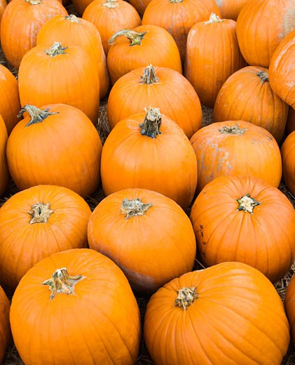 Group of pumpkins sitting on ground at farmers market. : Stock Photo