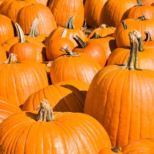 Stock Photo: 1525R-104606 Autumn pumpkins at outdoor market.