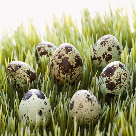 Speckled eggs on grass. : Stock Photo