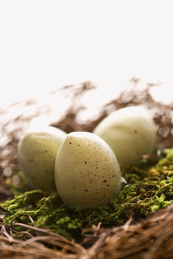 Stock Photo: 1525R-105256 Studio still life of bird's nest with three speckled eggs.