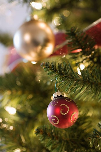 Close up of gold and red ornaments hanging in Christmas tree. : Stock Photo