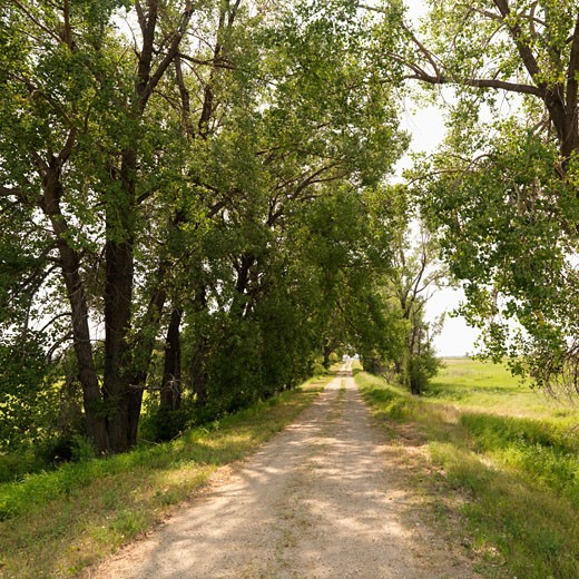 Stock Photo: 1525R-109320 Scenic tree lined rural gravel road in country.