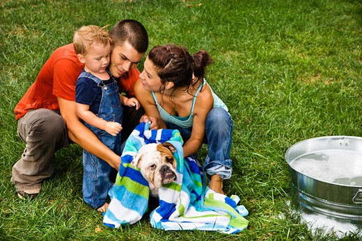 Stock Photo: 1525R-110029 Caucasian family with toddler son drying English Bulldog with towel after a bath outdoors.