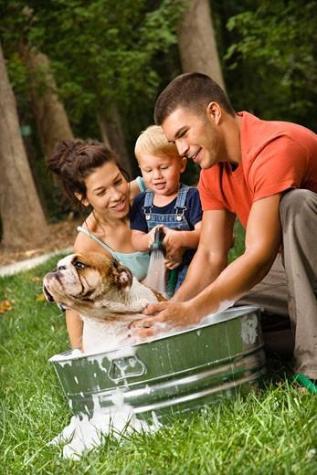 Stock Photo: 1525R-110035 Caucasian family with toddler son giving  English Bulldog a bath outdoors.