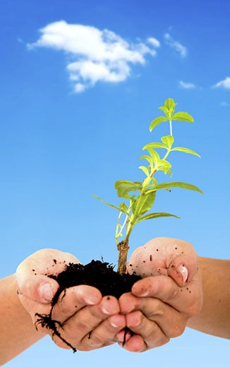 hands holding a newly born plant with a sky in the background : Stock Photo