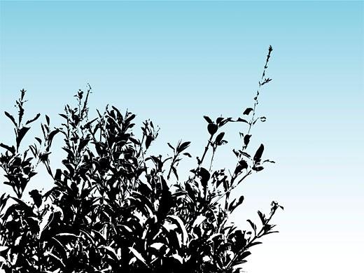 Bush silhouette : Stock Photo