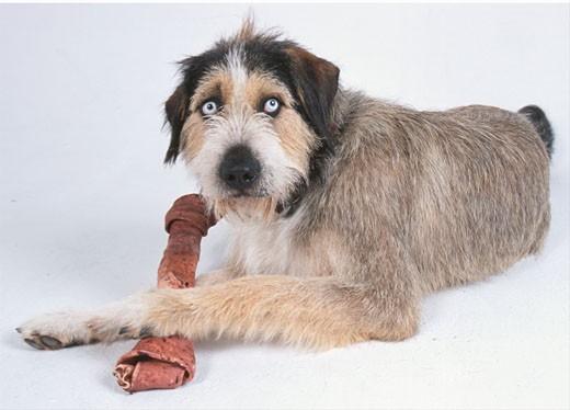 dog with bone  : Stock Photo