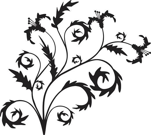 Scroll, cartouche, decor, vector illustration : Stock Photo