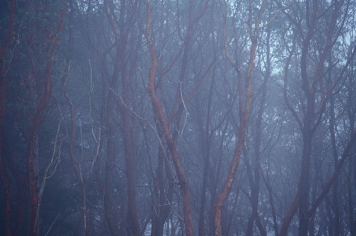 Stock Photo: 1525R-14675 Woods at Dusk