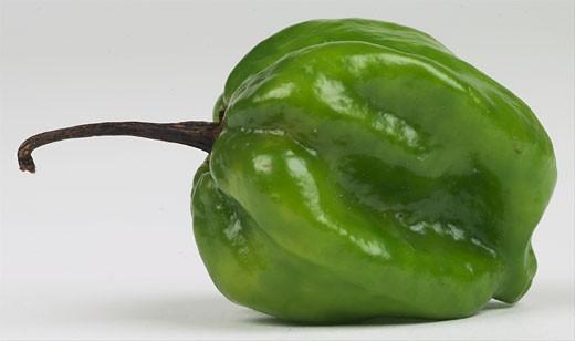 Stock Photo: 1525R-14844 poblano pepper