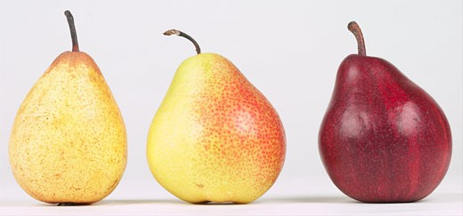 Stock Photo: 1525R-14973 assorted pears
