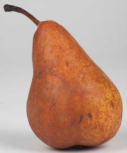 Winter Nellis Pear  : Stock Photo