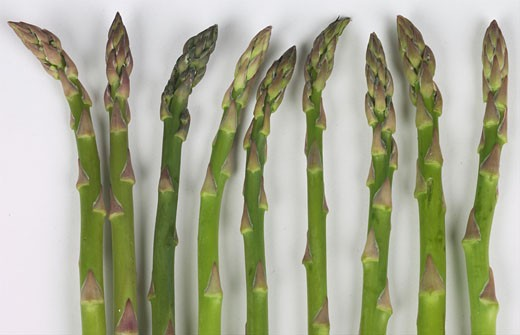 bunch of Asparagus  : Stock Photo