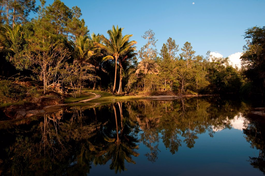 Mountain Pine Ridge Reserve, Reflection in Water : Stock Photo