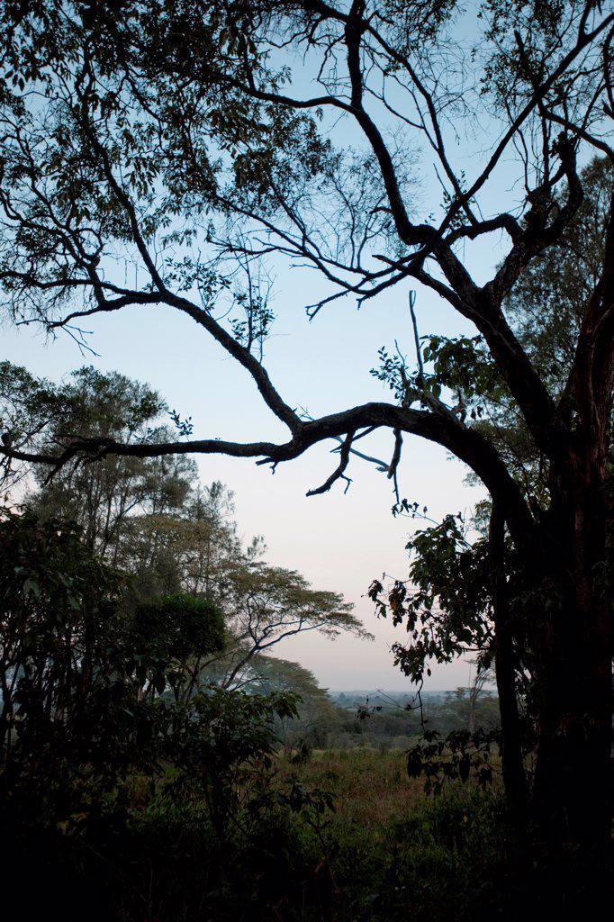 Giraffe Manor grounds in Kenya : Stock Photo