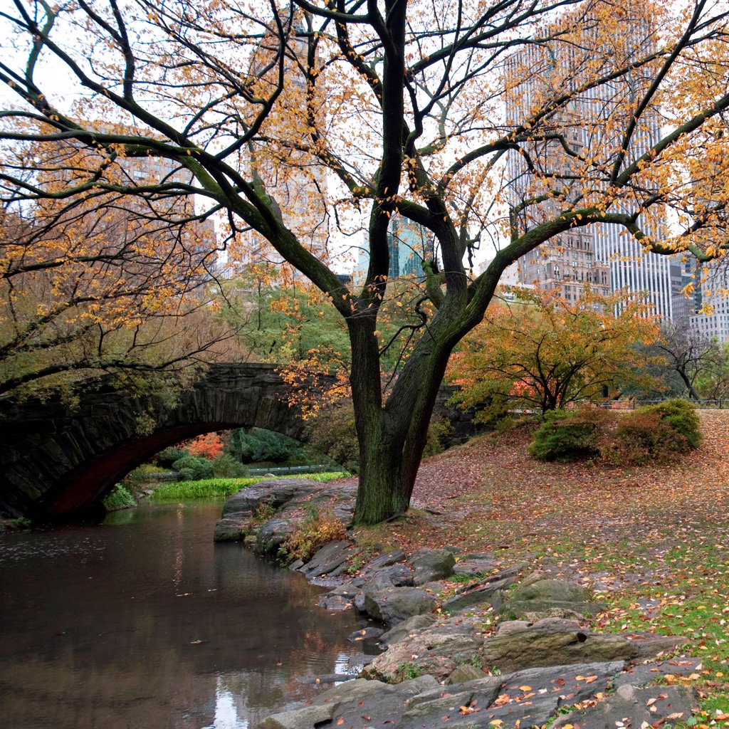 Autumn in Central Park in Manhattan, New York City, U.S.A. : Stock Photo