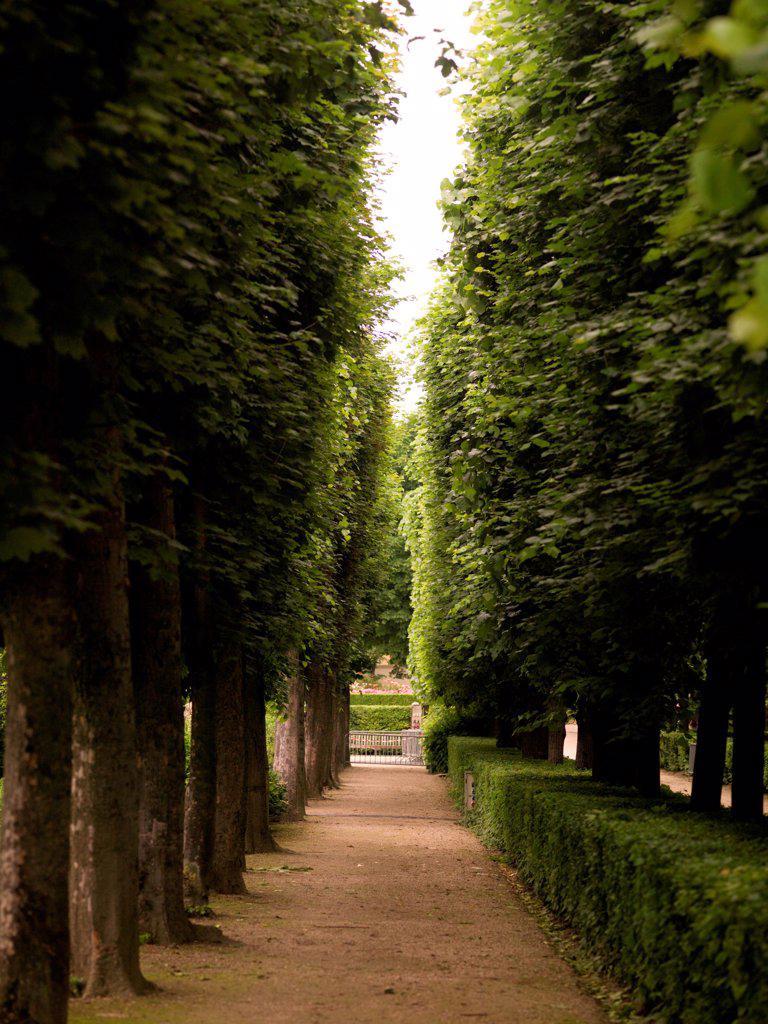 Walkway between trees in Paris France : Stock Photo