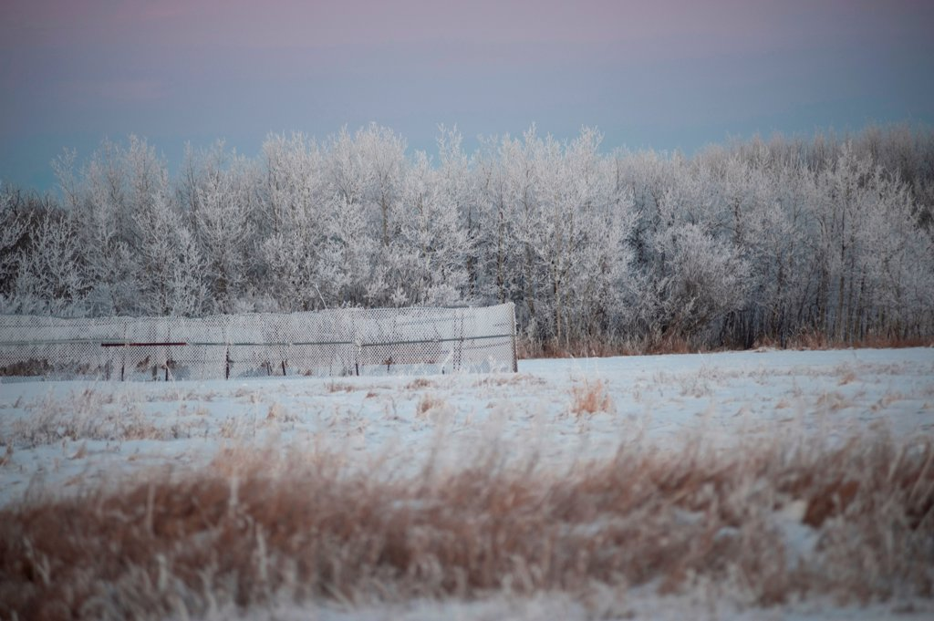 Stock Photo: 1525R-198369 Winnipeg, Winter Frost