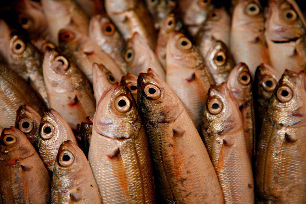 Stock Photo: 1525R-201630 Fish
