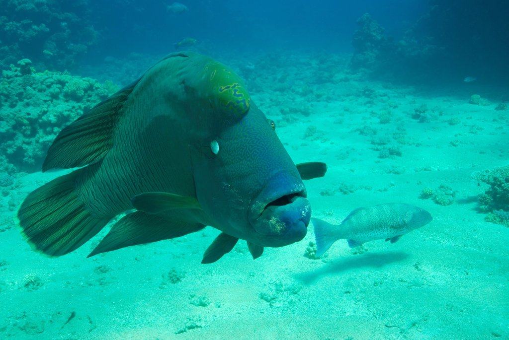 Stock Photo: 1525R-201663 Underwater photography, fish