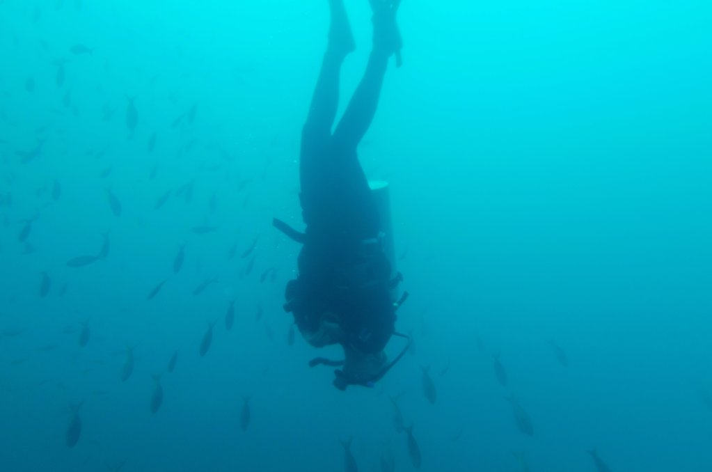 Stock Photo: 1525R-207133 Scuba diver and fish swimming underwater, San Cristobal Island, Galapagos Islands, Ecuador
