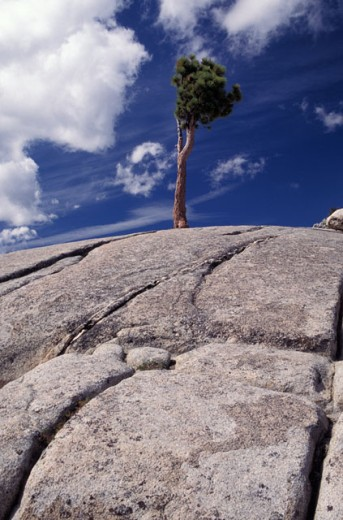 Lone Tree on Windswept Rock : Stock Photo