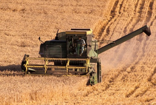 Stock Photo: 1525R-45441 Harvesting Wheat