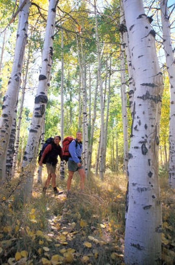 Stock Photo: 1525R-45873 Couple Hiking Through Aspens