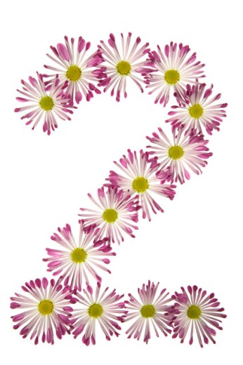 Stock Photo: 1525R-71793 A Two Made Of Pink And White Daisies