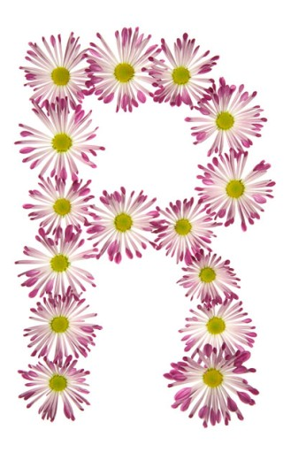 Stock Photo: 1525R-71819 An R Made Of Pink And White Daisies