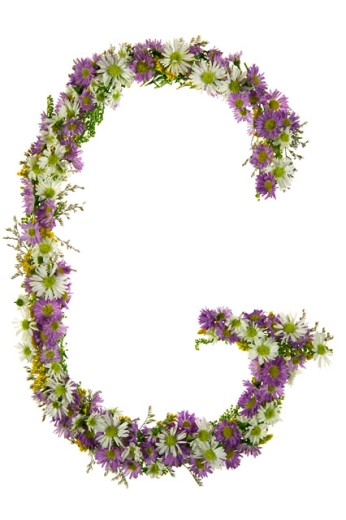 Letter G In A Purple And White Flower Font : Stock Photo