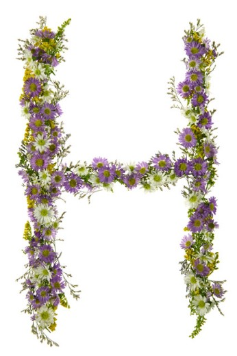 Stock Photo: 1525R-71859 Letter H In A Purple And White Flower Font