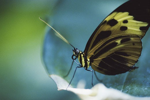 Close-up of a butterfly : Stock Photo