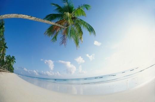 Paradise Beach, Zanzibar, Tanzania, Africa : Stock Photo
