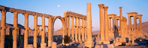 Stock Photo: 1527R-010784 Great Colonnade, Palmyra, Syria