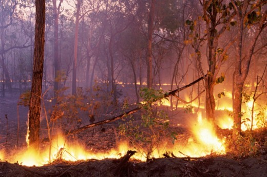 Stock Photo: 1527R-012811 Forest Fire, kakadu National Park, Northern Territory, Australia