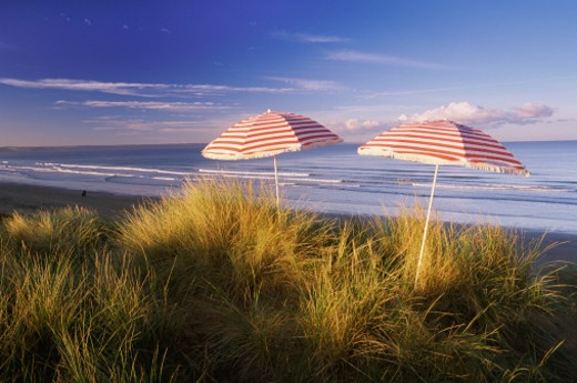 Two Parasols in the Dune Grass on the Coast of Devon, England : Stock Photo