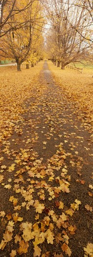 Stock Photo: 1527R-014119 Autumn Leaves on a Footpath, Oregon Pass, Maryland, USA