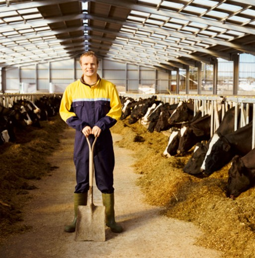 Stock Photo: 1527R-019858 Portrait of a Farmer in Overalls Standing in a Dairy, Cows Feeding on Grain