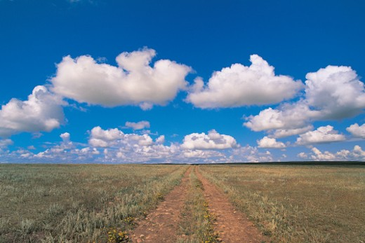 Dirt Road on Prairie with Cumulus Sky Above, Saskatchewan, Canada : Stock Photo