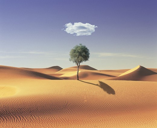Single Cloud in the Sky Over a Tree in the Desert : Stock Photo