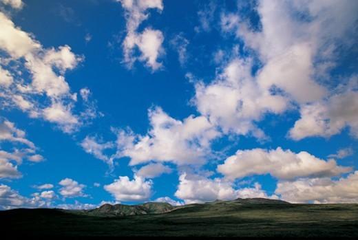 Dramatic Cloudy Sky Over Remote Shrubland, Denali National Park, Alaska, USA : Stock Photo