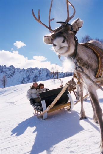 Couple in a Sledge Pulled by a Deer : Stock Photo