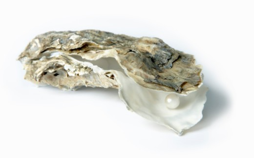 Pearl inside oyster shell, close-up : Stock Photo