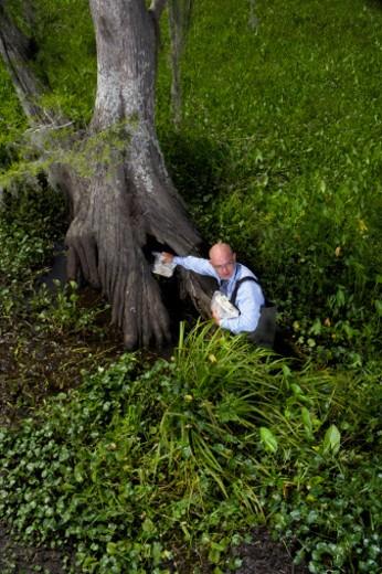 Louisiana, USA : Stock Photo