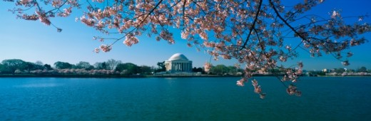 Stock Photo: 1527R-1107321 This is the Jefferson Memorial with cherry blossoms bordering the top of the frame. The Tidal Basin is in front of the memorial all against a blue sky.