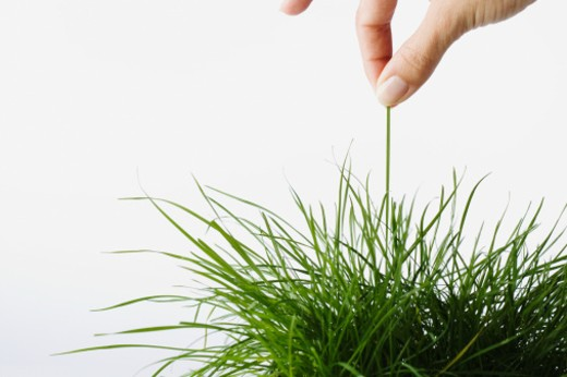 Stock Photo: 1527R-1108640 Woman holding blade of grass, close-up