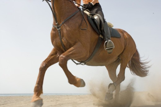 Woman riding horse on beach, low section : Stock Photo