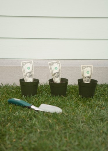 US Dollar bills growing from pots : Stock Photo