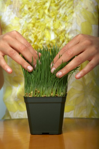 Young woman fixing pot of grass, close-up : Stock Photo